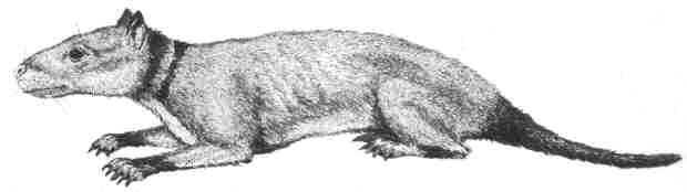 http://www.paleocene-mammals.de/hyopsodus.jpg