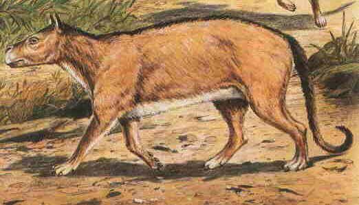 http://www.paleocene-mammals.de/phenacodus.jpg